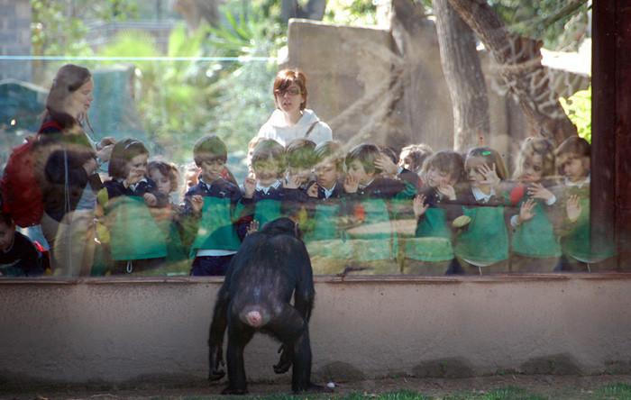 Зоопарк Барселоны Барселона
