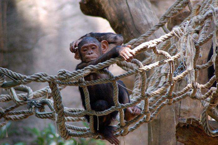 zoopark-barcelona - маршрут Барселона для детей
