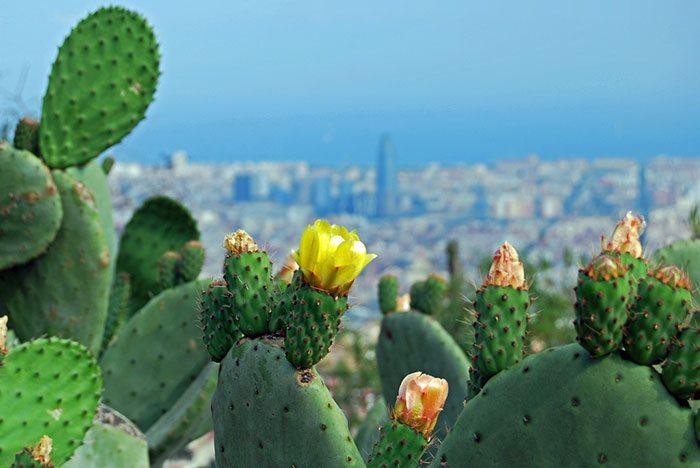 Смоторовые площадки Барселоны
