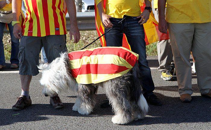 Язык в Барселоне - Каталонский