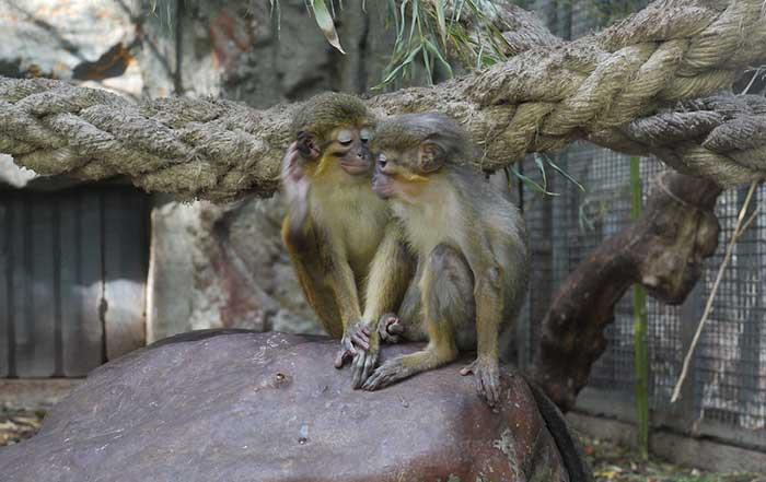 Зоопарк Барселоны: коротко об истории