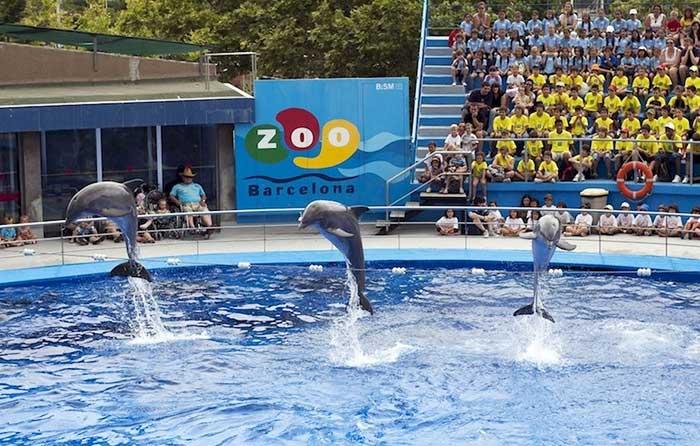 Зоопарк Барселоны: Дельфинарий