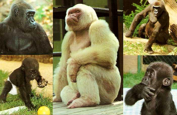 Коллекция животных зоопарка Барселоны