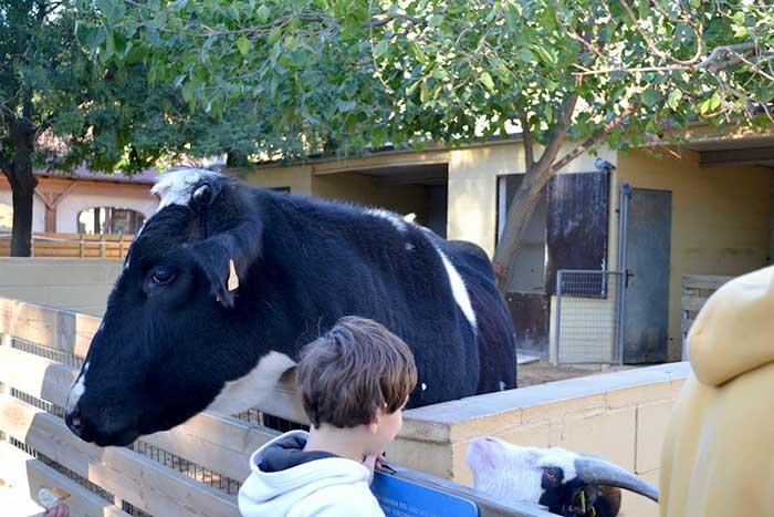 Домашние и сельскохозяйственные животные