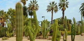 Парк кактусов в Барселоне