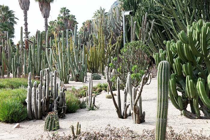 Парк кактусов в Барселоне закрыли на реконструкцию