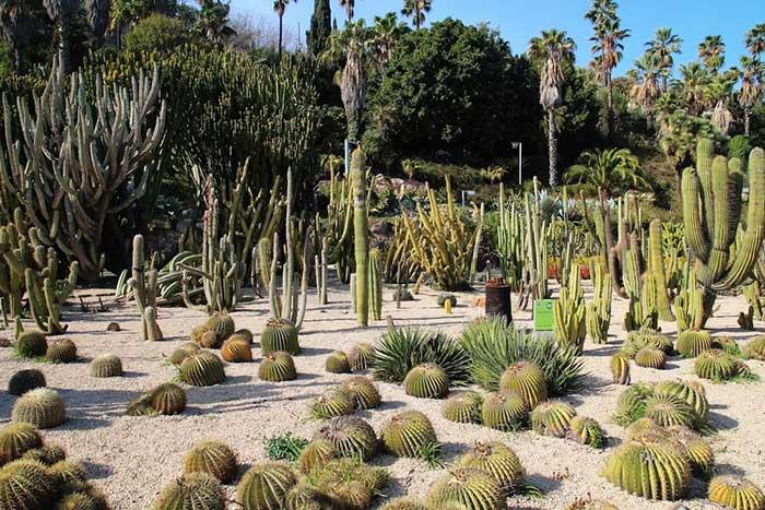 Парк кактусов в Барселоне: как добраться