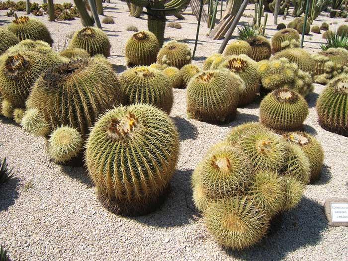 Чем примечателен парк кактусов