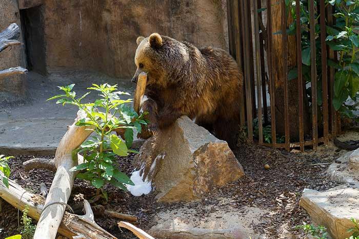 Без очереди в зоопарк Барселоны