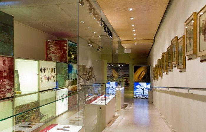 Музей Vinseum