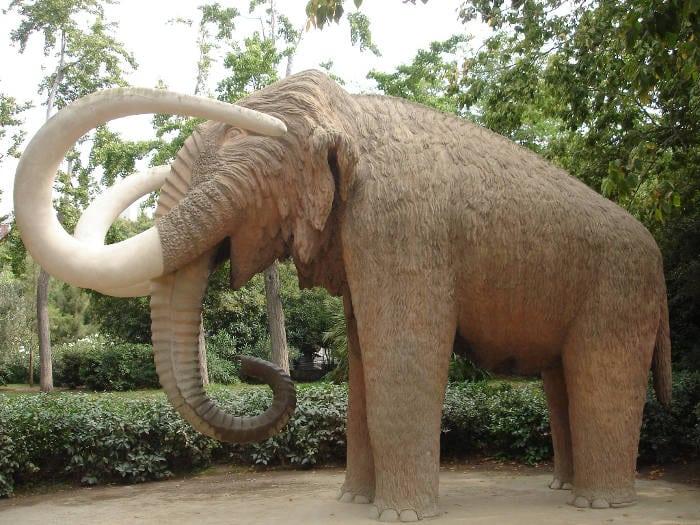 Зоологический музей в парке Цитадели