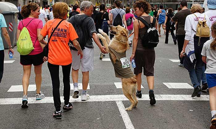 39 марафон El Corte Ingles: организационные моменты