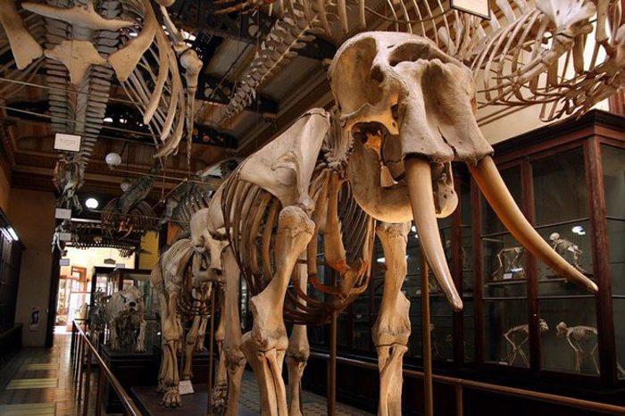 Музей естествознания, Зоологический музей