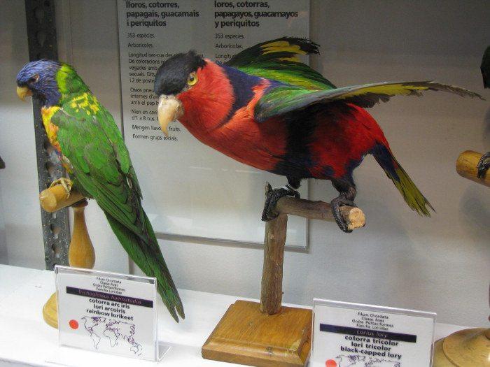 Экспонат музея естествознания