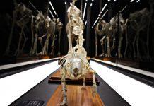 Музей естествознания в Барселоне