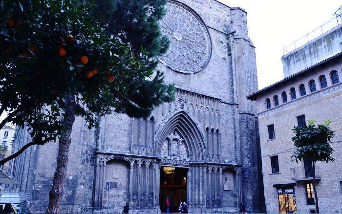 Сосна у церкви Santa María del Pi