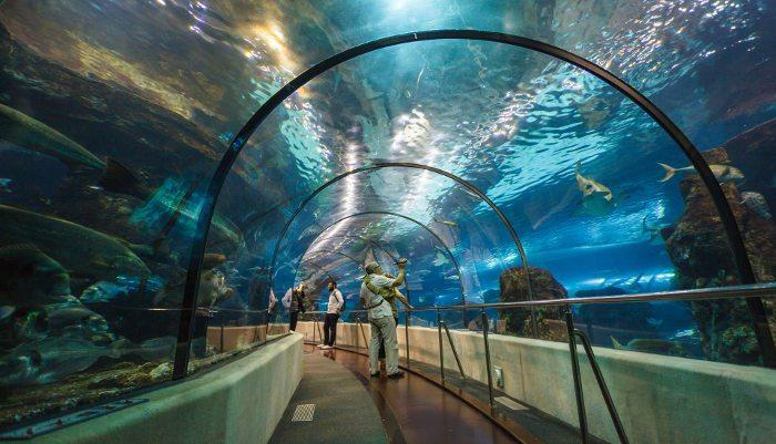 Куда пойти в Барселоне: городской аквариум