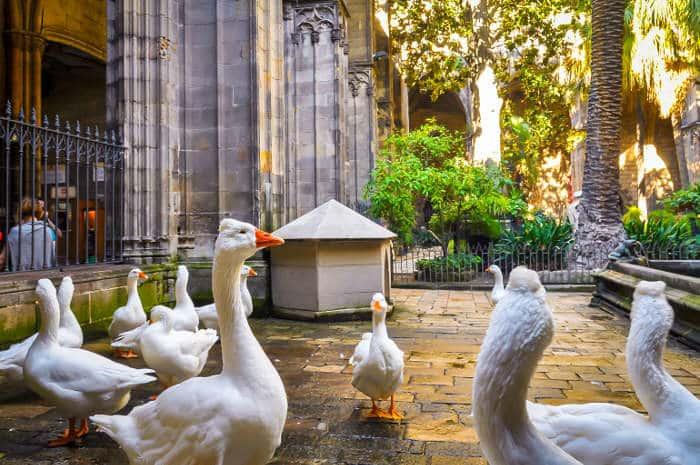 13 белых гусей во внутреннем дворе Кафедрального собора