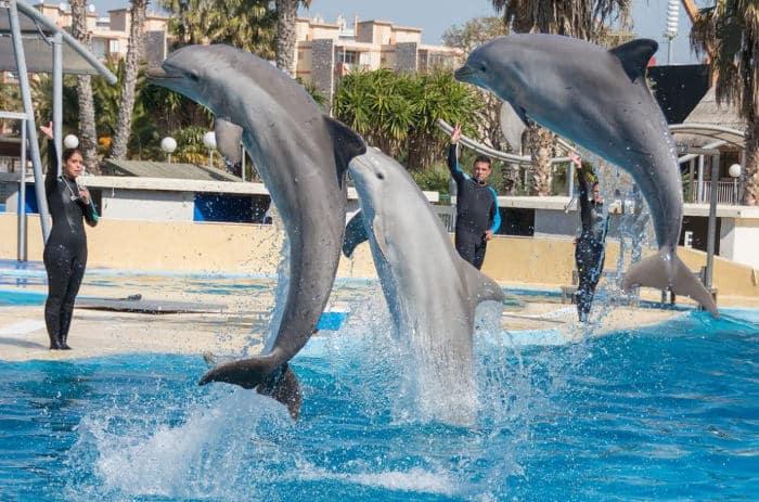 Дельфинарий Акваполис Ла-Пинеда