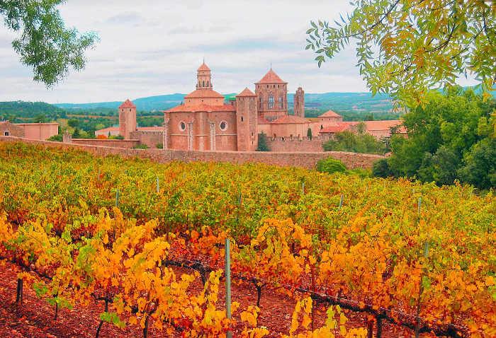 Виноградные поля рядом